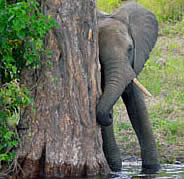 African Elephant Guesthouse provides accommodation in Germiston