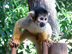 Bush Babies Monkey Sanctuary Pretoria Hartbeespoort Dam, Guided tours Monkey Sanctuary Pretoria Hartebeespoort Dam